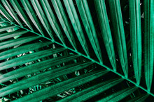 Abstract Green Background, Tropical Palm Leaves