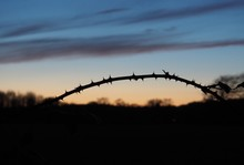 Silhouette Of A Thorn Branch With Orange/blue Skies In The Background