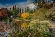Fall Colors At UC Davis Califo...