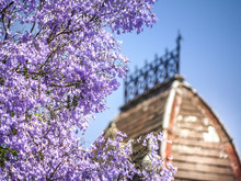 Close Up Of Purple Jacaranda Blossoms On Tree Branches Against Ancient Style Old Tower. Melbourne, VIC Australia.