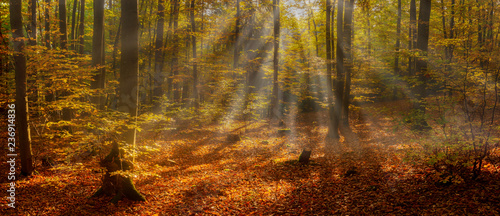 Autocollant pour porte Orange eclat Beautiful Scene Misty Old Forest with Sun Rays, Shadows and Fog. Panorama