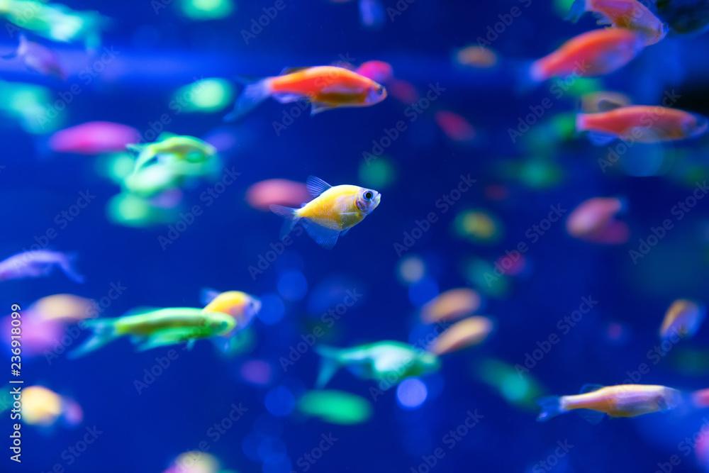 Underwater world fish Aquarium Canvas-taulu