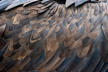 Closeup Of Brown Feathers Of A Vulture