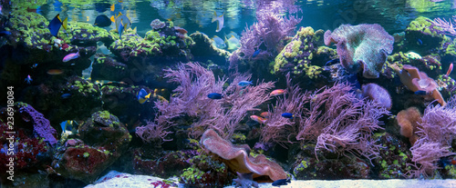 Valokuva Underwater world fish aquarium