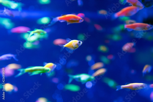 фотографія  Underwater world fish Aquarium
