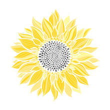 Sunflower.Sketch. Hand Draw Ve...