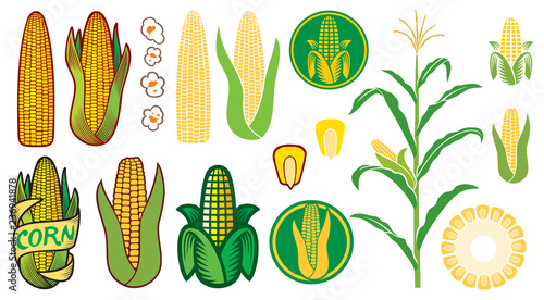Fényképezés corn vector icons set (grain or seed, stalk, popcorn, corncob)