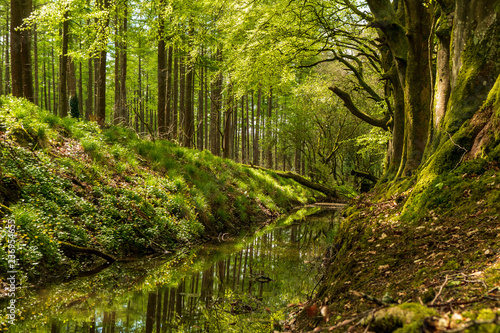 Printed kitchen splashbacks Forest river Beautiful green trees reflected in a small river that flows trough the forest. Spring scenery in Russeltown Wood, County Wicklow, Ireland.