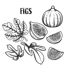 Graphic Fig Fruits And Leaves Isolated On White Background