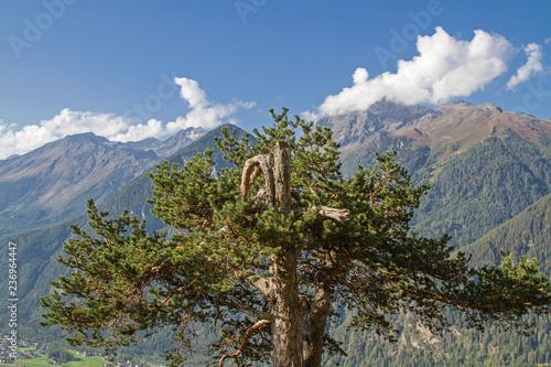 Fotografie, Obraz  Arve im Ötztal