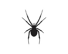 Vector Sign Spider