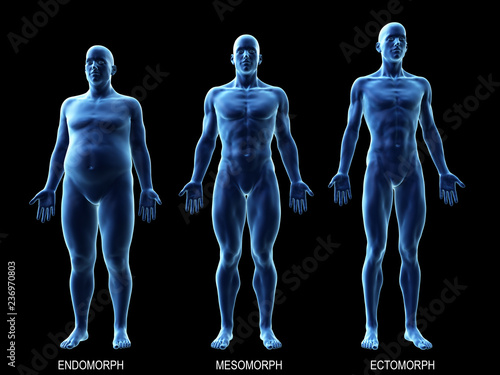 Obraz 3d rendered medically accurate illustration of the male body types - fototapety do salonu