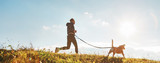 Fototapeta Zwierzęta - Canicross exercises. Man runs with his beagle dog at sunny morning. Healthy lifestyle concept.