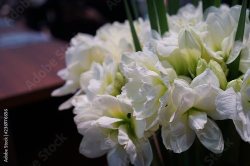 Fototapety, obrazy: bouquet of lilies of the valley