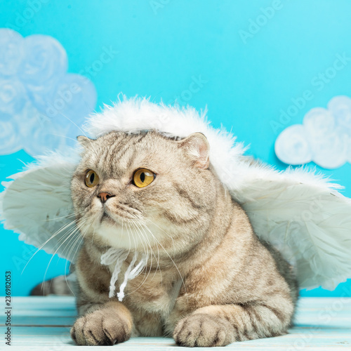 Fototapety, obrazy: British cat with angel wings, Christmas and New Year