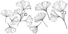 Vector. Engraved Black And White Ginkgo Leaf. Plant Botanical Garden. Isolated Ginkgo Illustration Element.