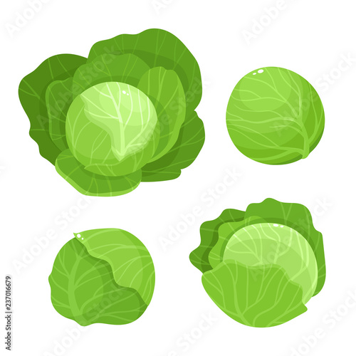 Valokuvatapetti Bright vector illustration of colorful cabbage isolated on white background