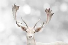Portrait Of Beautiful White Fa...