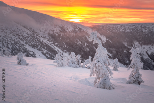 Poster Lavender mountains, giant, czech, winter, mountain, krkonose, snow, karkonosze, landscape, panorama, karpacz, nature, sky, snowy, white, sun, travel, cold, blue, view, europe, outdoor, day, scenery, ski, valle