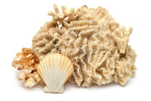 Collection Seashell And Coral ...