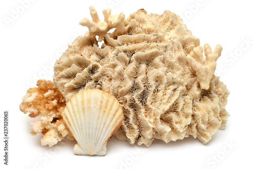 Collection seashell and coral isolated on white background. Creative concept, marine life