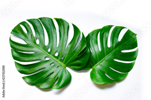 Poster Vegetal Monstera leaves leaves with Isolate on white background Leaves on white