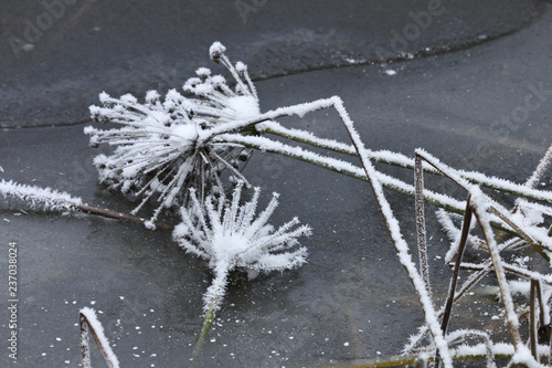 Canvas Print Artist's winter still nature with plants.