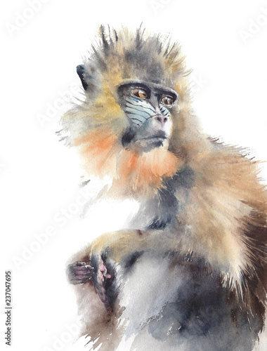 Fotografie, Obraz  Monkey sitting colorful animal wildlife African original watercolor painting iso