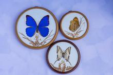 Picture Of True Butterflies