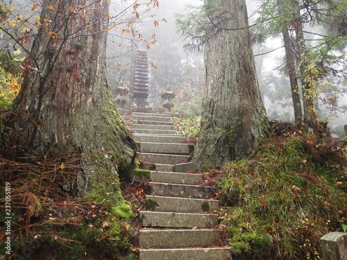 Photo Stands Road in forest mont koya