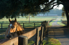 Ocala Florida Horse Farm Scenic