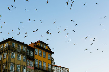 Seagulls circling over the houses in old Porto, Portugal.