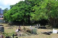 Cemetery On The Side Of The Road Known As The Hip Strip,  Montego Bay, Jamaica. Surrounding Buildings, Trees. Cemetery Appears To Be In The Process Of Being Cleaned Up.