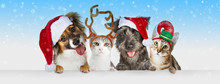 Christmas Dogs And Cats Over W...