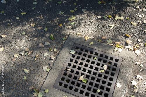 Fotografia, Obraz  排水溝のフタ