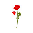 Bright red poppy flowers with stem, floral design element vector Illustration on a white background