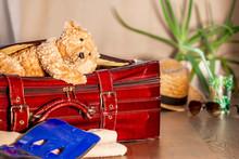 Travel Concept Of Teddy Bear A...