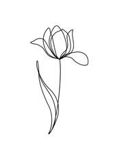 Tulip Line Art