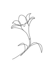 Hand Drawn Lily Flowers. Black...