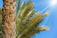 Trunk Of A Palm Tree And Green Leaves On Blue Sky
