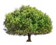 Leinwanddruck Bild - Argan tree isolated