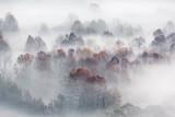 Drzewa w jesiennej sukni, Lombardia, Włochy - 237137449