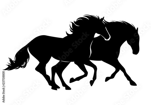 Photo pair of wild mustang horses running free - black vector silhouette design