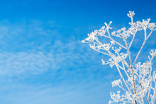 Abstract Flowers In Frost On Blue Sky Background
