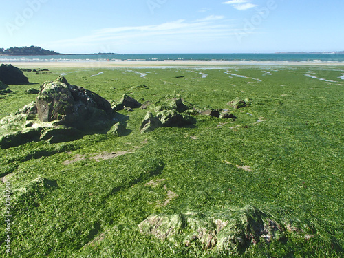 Leinwand Poster Stranded Green Seaweeds Overgrowth on Brittany Coast