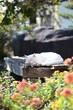庭でくつろぐ猫