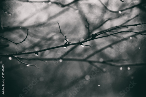 Fotobehang Bomen lonely leafless tree branches with drops of water after a November cold rain
