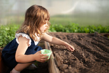 Adorable Little Girl Planting ...
