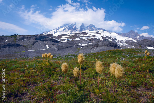 Fotografie, Obraz  Flowers with Mount Rainier in the background on a beautiful summer day