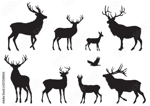 Photo  Silhouettes of different Deers and Elks